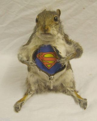 I wish I could have stuffed my squirrels to look like this!